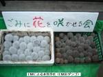発酵済EM泥だんご(05.12.2) 004.JPG